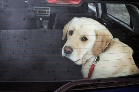 Do Not Leave Animals in Hot Vehicle | Marietta Wrecker Service