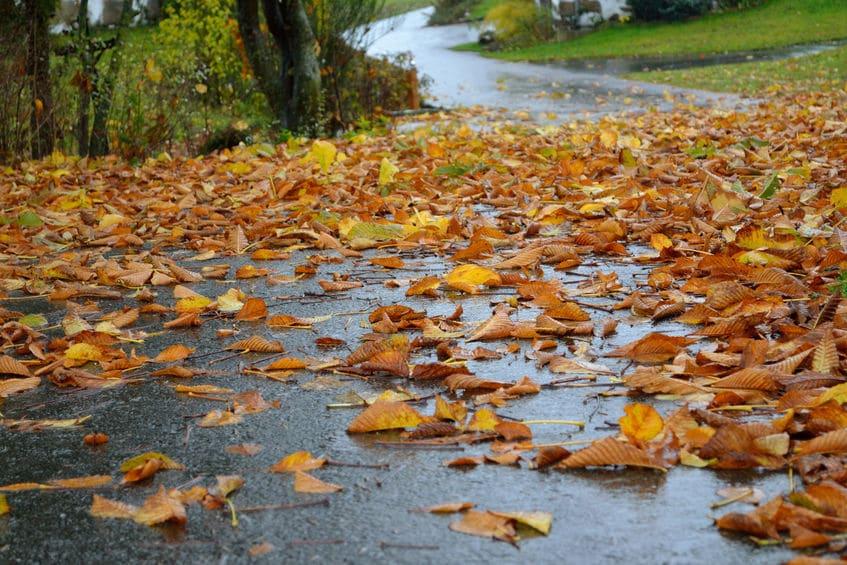 Wet Leaves on Road | Marietta Wrecker Service