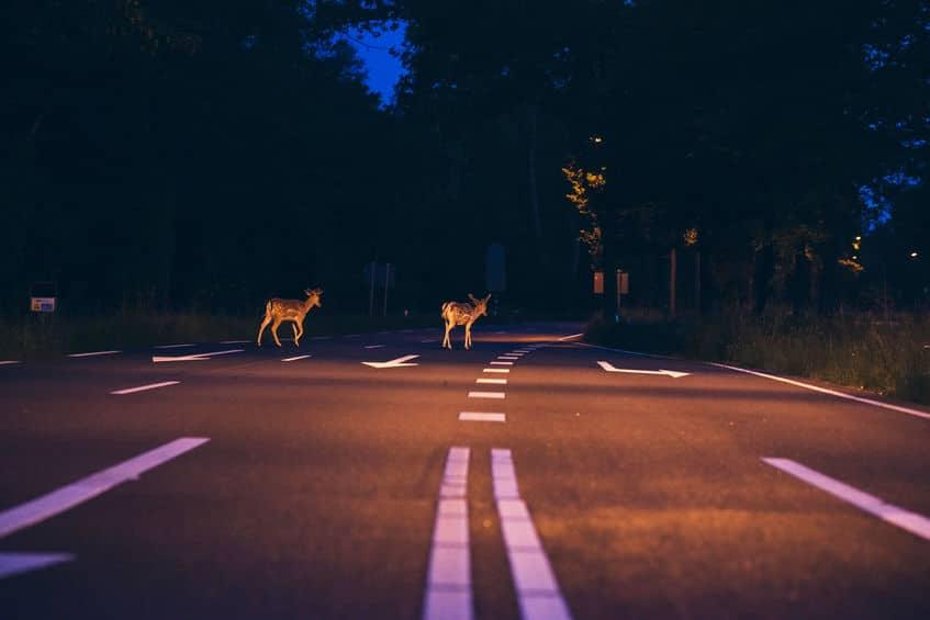 Deer Crossing Street Fall Safety | Marietta Wrecker Service