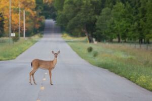 Avoid Deer Crossings | Marietta Wrecker