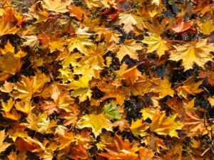 Avoid Wet Leaves On The Road | Marietta Wrecker
